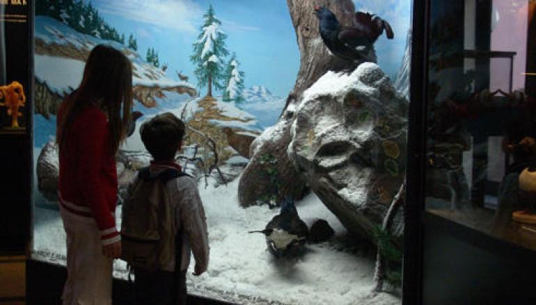 Con i bambini al Museo Civico di Zoologia di Roma