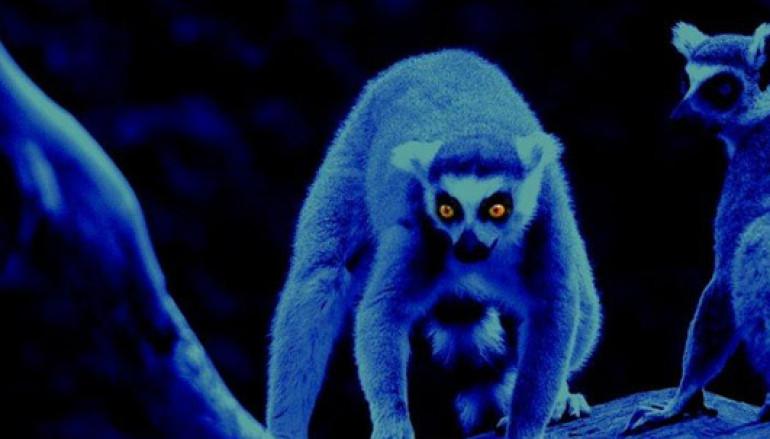 Un Safari notturno al Bioparco di Roma