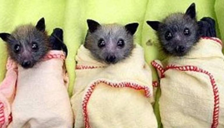 Attività notturna al Museo di zoologia di Roma insieme ai Pipistrelli