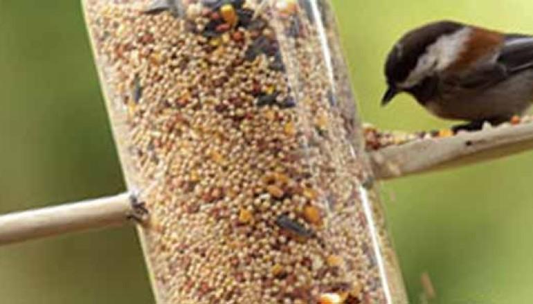 Come preparare una mangiatoia per gli uccelli