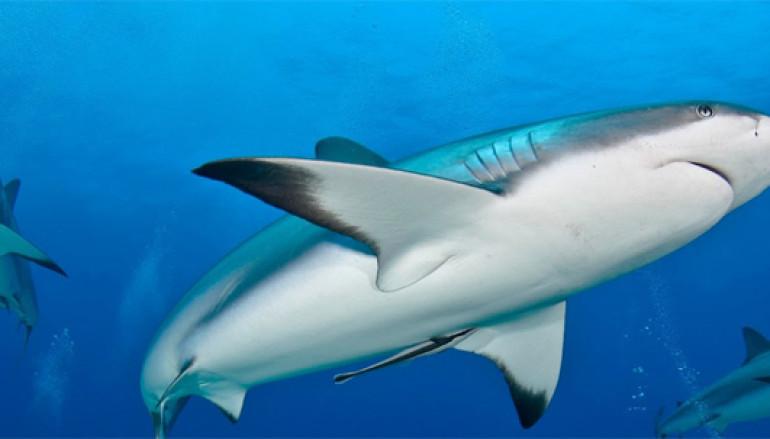 Mostra e laboratorio didattico per bambini sugli squali da Dì Natura