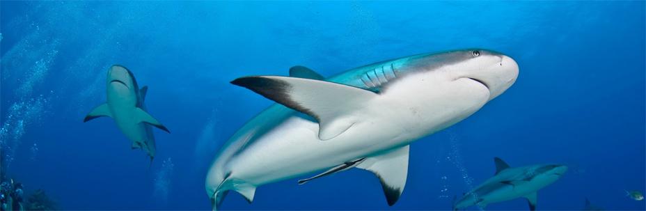 mostra sugli squali da Dì Natura
