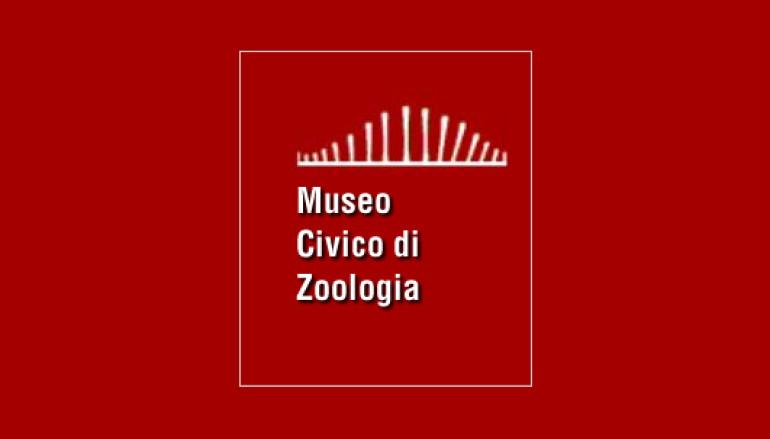 Per i bambini al Museo di Zoologia questo fine settimana
