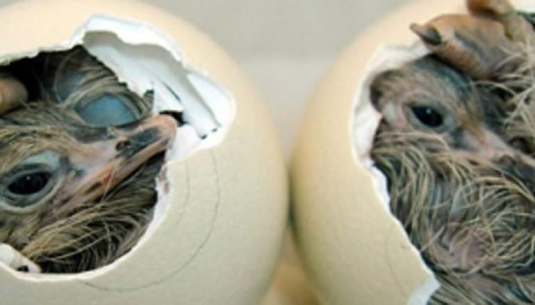 Al Museo di Zoologia laboratorio per bambini Caccia all'uovo
