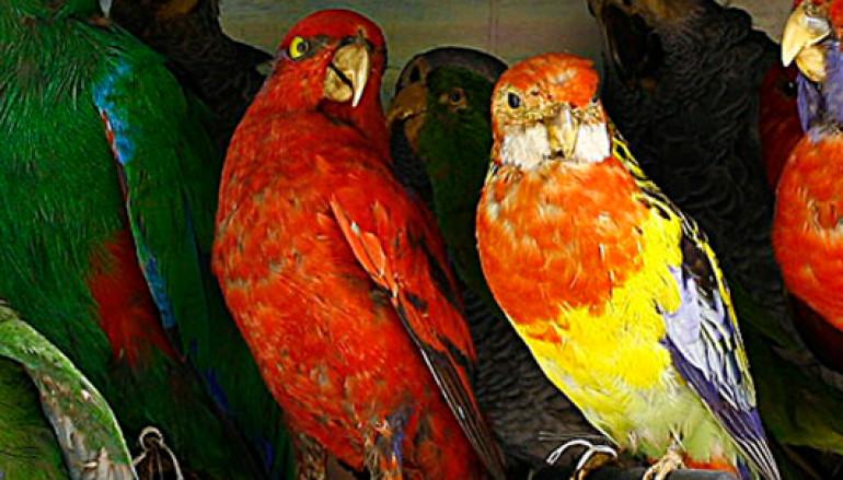 """""""Pasquetta in Famiglia"""" al Museo di Zoologia di Roma"""