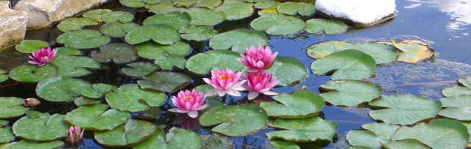 technotown piante acquatiche