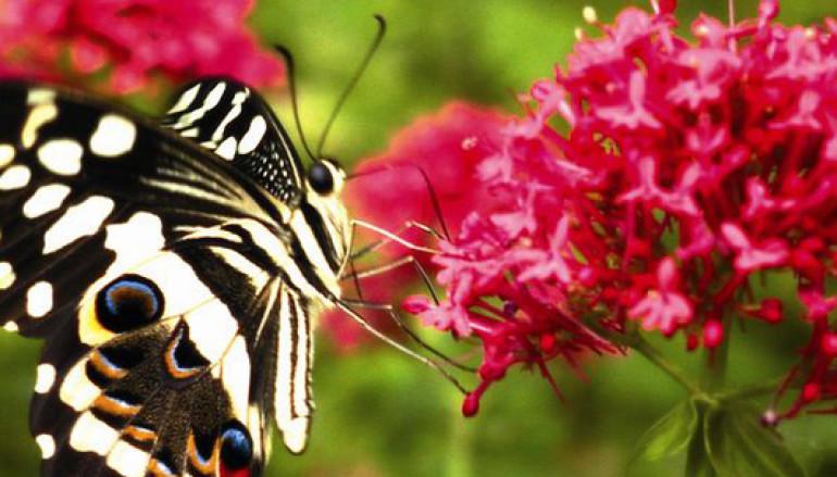 Il Bioparco di Roma apre un'area dedicata alle Farfalle