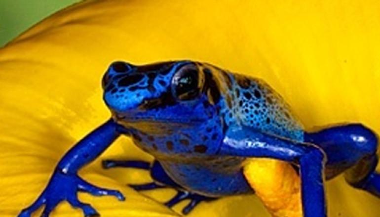 Per il 25 aprile visita guidata per bambini al Museo di Zoologia