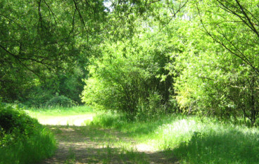 Natura in città… la Riserva dell'Insugherata