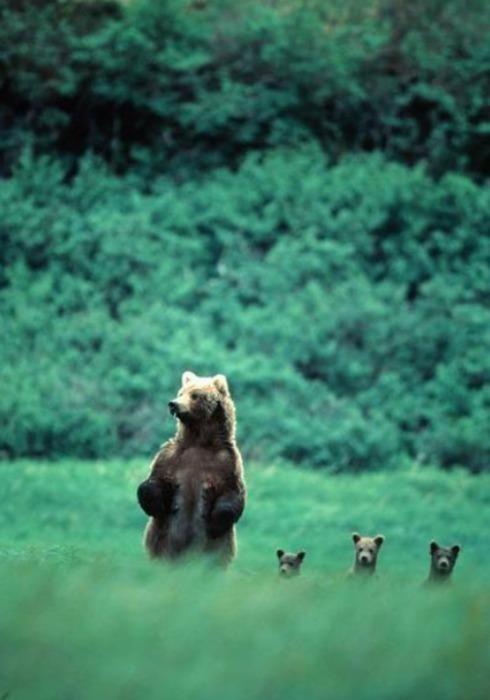 mamma orsa e figli