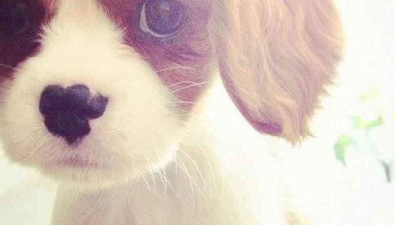 Tuo figlio vuole un cane o un gatto? Open Day a Muratella