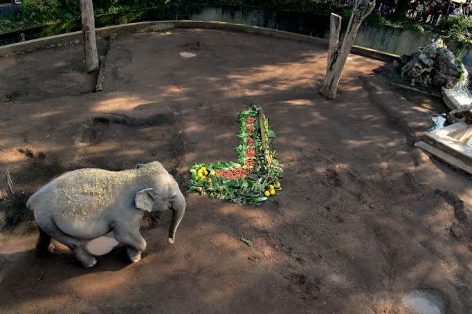 elefante sophia bioparco di roma