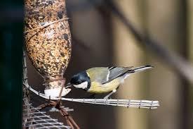 mangiatoie per uccellini