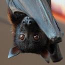 Nuova Bat Night a Villa Borghese