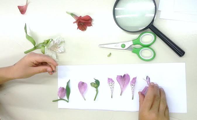 orto-botanico4
