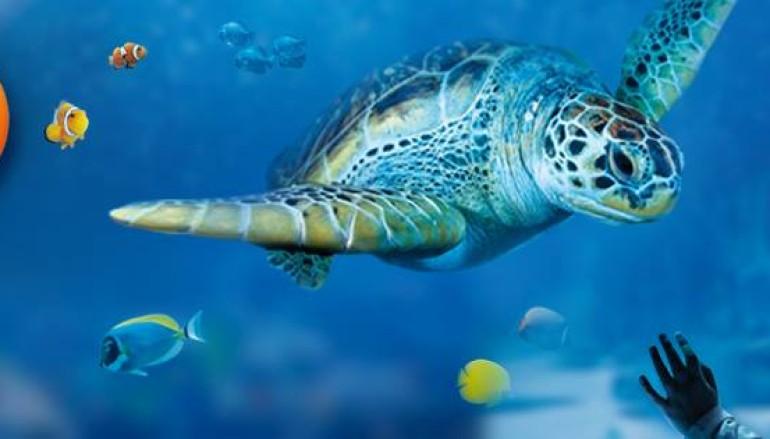 Sta per aprire l'Acquario di Roma – Il SEA LIFE Roma Aquarium