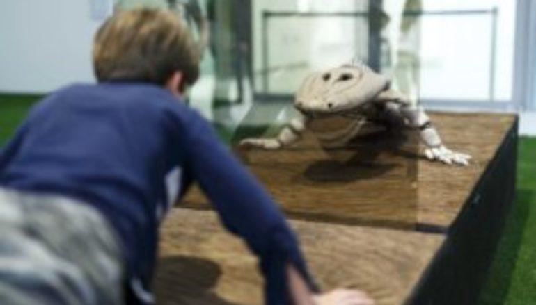 Laboratorio per famiglie con bambini dai 5 ai 10 anni sulla mostra Nature Forever Pietro Gilardi