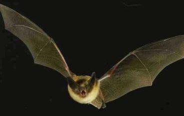 AreAvventura 2017: Bat Night – La notte dei pipistrelli a Villa Borghese