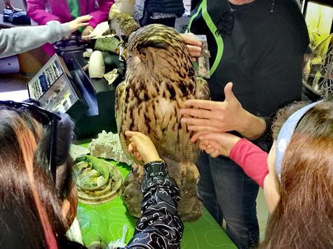 attività bambini roma museo di zoologia