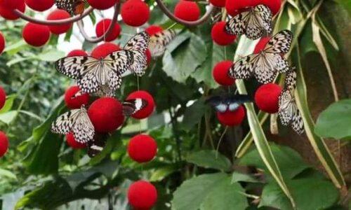 casa delle farfalle ortobotanico di Roma
