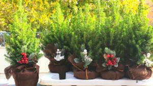 piante per Natale