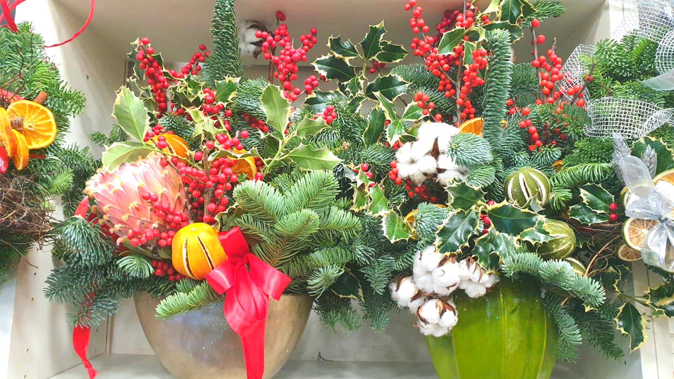 piante e fiori per Natale